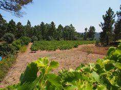 Coworkinglisboa retreat. Portugal finest wine camping experience.