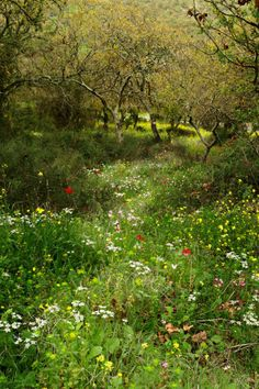 Beautiful Wildflower Garden created by Mother Nature