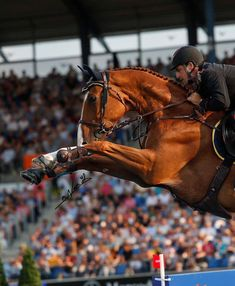 Kicked in the Head: The Equestrian Helmet Show Jumping Horses, Show Horses, Equestrian Outfits, Equestrian Style, Horse Girl, Horse Love, Palomino, English Riding, Horse Photos