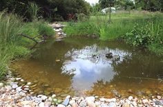 natural wildlife-pond More