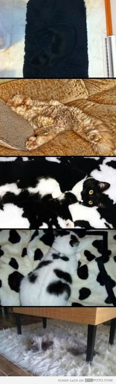 Camouflage cats - Funny cats lying on couches and rugs of the same colors and patterns as them making it the perfect camouflage being almost invisible there.