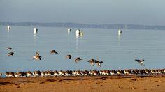 Oiseaux, birds Andernos les Bains