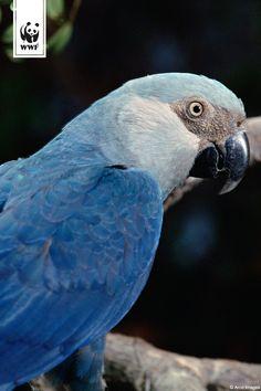 Der seltenste Vogel der Welt via @WWF_Deutschland
