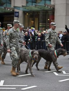 Irish Wolfhounds and soldiers!  My two fave things!
