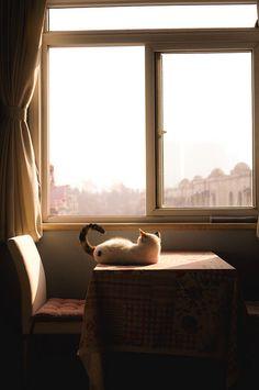 Godersi il Sole! Mi piace molto questa foto: l'abitazione sembra modesta, ma l'insieme mi trasmette un senso di pace e rilassatezza.
