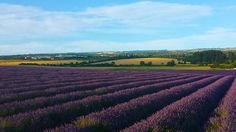 Six dazzling day trips less than an hour from London