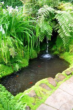 Small Tropical Gardens, Small Water Gardens, Fish Pond Gardens, Small Garden Fish Ponds, Small Garden Waterfalls, Outdoor Fish Ponds, Garden Pond Design, Tropical Garden Design, Landscape Design