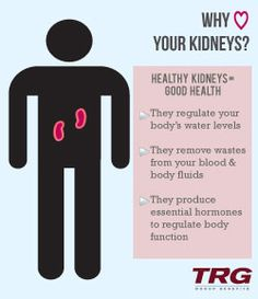 Kidney health infographic designed for TRG Fitness Nutrition, Diet And Nutrition, Living Kidney Donor, Healthy Kidneys, Organ Donation, Body Fluid, Kidney Health, Chronic Kidney Disease, Sang