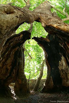 One of the oldest platan tree in the world: 2000year near Skhtorashen village, Karabakh (view from inside)