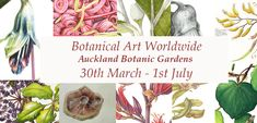 Events | Friends of Auckland Botanic Gardens