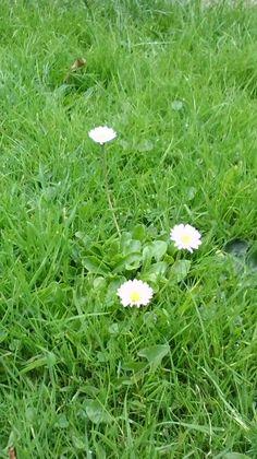 Abergrave spontaneous flowers
