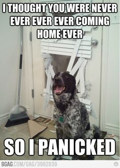 Exactly what I think dogs are thinking!