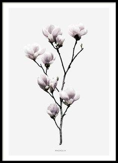 Schönes und stilvolles Plakat mit Magnolienblüten.