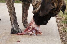 Feeding Your Mastiff Puppy a Raw Diet Mastiff Puppies, English Mastiff, Homemade Dog Food, My Dear Friend, Dog Life, Dog Food Recipes, Diet, Blog, Animals