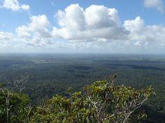 03 Discovery Coast Atlantic Forest Reserves (디스커버리해안 대서양림 보호지역)