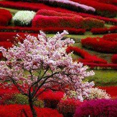 Increibles colores de naturaleza.