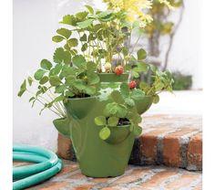 strawberry pot: green glazed ceramic strawberry pot