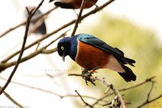 Small bird on a tree Small Birds, My Photos, Animals, Self, Pictures, Animales, Animaux, Little Birds, Animais