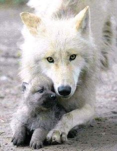 mama wolf and her pup