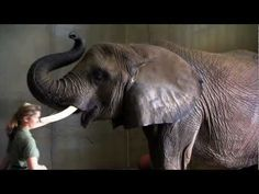 The Weekly Special - Cool Down at the Indianapolis Zoo. Video by WTIUtheweekylspecial