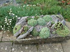Alternative Eden Exotic Garden: Alpine Troughs, Miniature Gardens