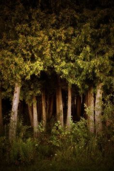 In the Woods by sweet.dreams