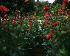 A flower farm just outside Pisgah Forest in North Carolina