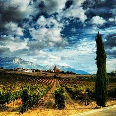 Conoce las 20 Rutas del Vino de España: enoturismo en estado puro