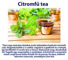 Citromfű tea | Socialhealth