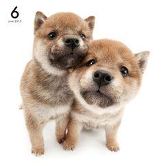 Artlist Collection THE DOG (Shiba)