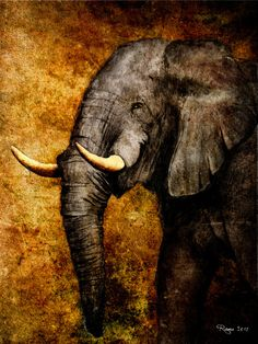 From sktech to digital paint. by Roma Artwork Elephant Love, Elephant Art, Oil Painting On Canvas, Painting & Drawing, Animal Posters, Animal Paintings, Elephant Paintings, Mural Art, Wildlife Art