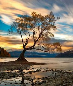 Most photographed tree in Wanaka New Zealand