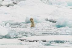 (撮影/キャプション:コリン・マッケンジー、撮影場所:スヴァールバル、北極海ノルウェー領群島)