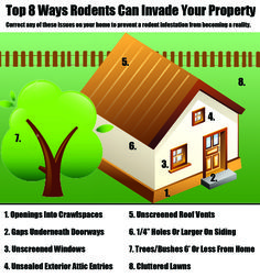 Top 8 Locations Rodents Use To Gain Access Into A Home.