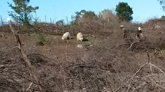 Next fence line started. Homesteading, Fence, Mount Rushmore, Mountains, Nature, Travel, Naturaleza, Viajes, Destinations