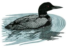 Loon ~ Woodcut ~ Nick Wroblewski