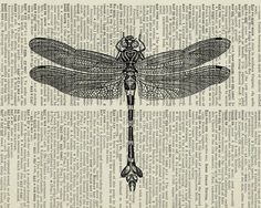 vintage dragonfly artwork I printed on old page from by FauxKiss on Wanelo