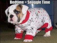 Snuggle Times quotes cute quote night goodnight good night goodnight quotes good nite