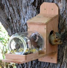 Squirrel Jar Feeder - Looks like it's build from a cedar fence picket.