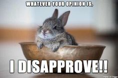 I disapprove! #bunny #bunnies #rabbit #rabbits #pet #pets #cuteanimals #cuteanimal