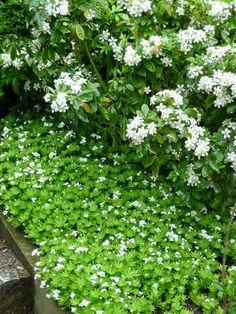 White Gardens, Garden Projects, Garden Inspiration, Vegetable Garden, Patio, Versailles, Green, Gardening, Outdoor