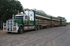 Cattle is the major industry of Tambo and huge oad trains help take the cattle from the stations to the markets. Festival Paint, Truck Festival, Train Truck, Road Train, Big Rig Trucks, Ford Trucks, Semi Trucks, Western Star Trucks, Trailers
