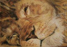 Lion pastel print