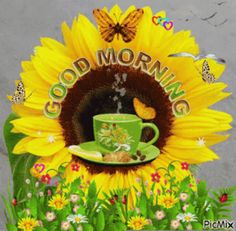 Good Morning Sister, Good Morning Wednesday, Cute Good Morning Quotes, Morning Quotes For Him, Good Morning Happy, Good Morning Picture, Good Morning Flowers, Good Morning Messages, Good Morning Greetings