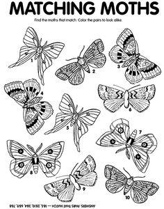 33 Best Summer Activities: Bugs & Butterflies images