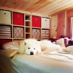 Our episode airs on Tiny House Nation on May 14! Our tiny abode is not only home to us but our two pups too! We used space saving ideas to include hide away dog bowls toy storage built in dog beds and a hide away den for our husky! Our tiny house is 100% dog friendly! We even have space for a third dog when we foster <3 Who said just because you live tiny you can't live large?! #tinyhouse #tinyhousenation #tinyhome #cabin #tinyhousemovement #tinyhouses #adventureisoutthere…