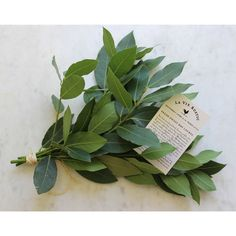 hang it or keep it in a basket in your kitchen or pantry. White Beans And Ham, Winter Savory, Fresh Bay Leaves, James Beard Foundation, Recipe Cards, Food Coloring, Love Flowers, Garden Projects, Twine