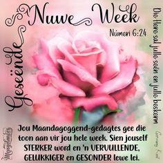 Evening Greetings, Goeie More, Good Morning Messages, Afrikaans, Words, Van, Good Morning Wishes, Vans, Horse