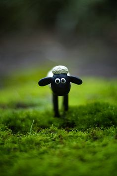 Lamb-ey