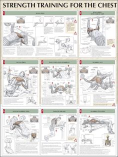 Strength Training for the Chest: bench press, bench press with narrow grip, incline press, bench press with dumbbells, dumbbell flys, incline dumbbell press, parallel bar dips, dumbbell pullovers ♦ #health #fitness #exercises #routines #chest #diagrams #body #muscles #gym #bodybuilding